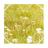 Kwiaty - grafika